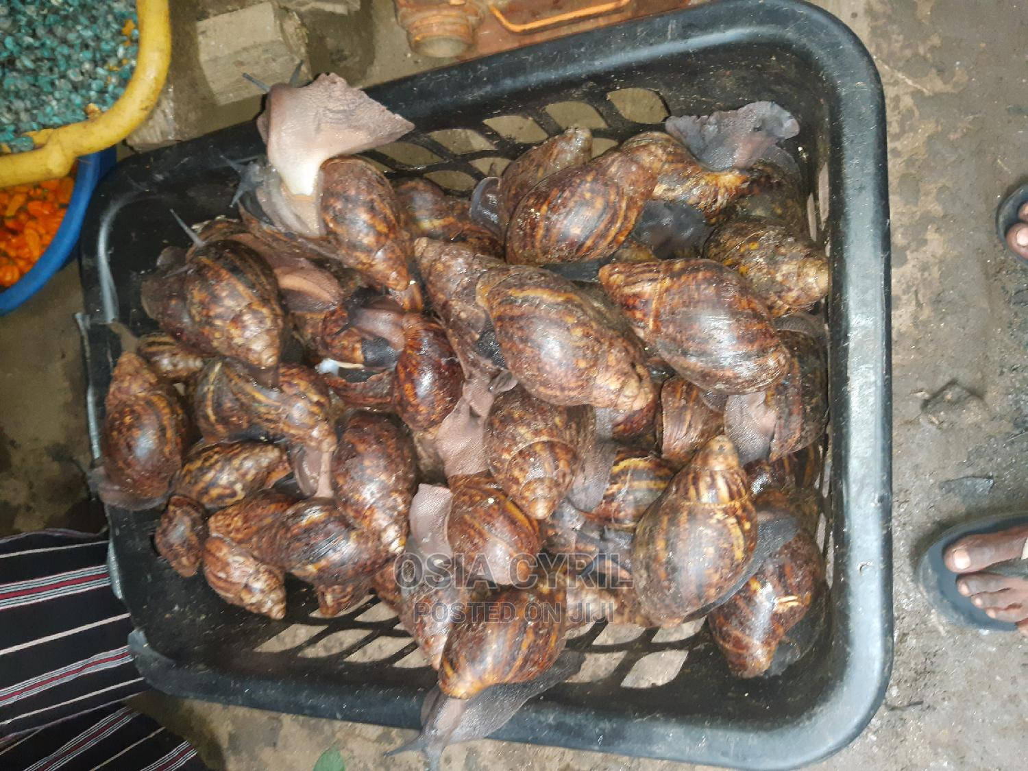 Archive: Snails of All Kinds