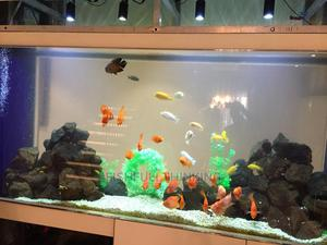 Exotic Fish Species | Fish for sale in Lagos State, Surulere