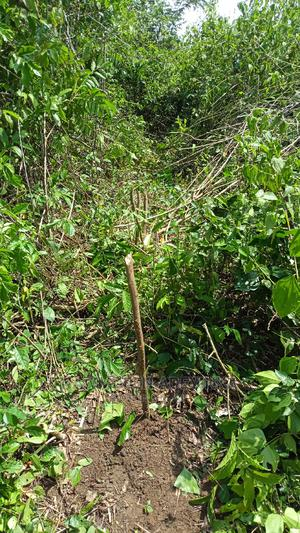 1 Acre of Land for Rent for Agricultural Purposes Etc   Land & Plots for Rent for sale in Ogun State, Obafemi-Owode
