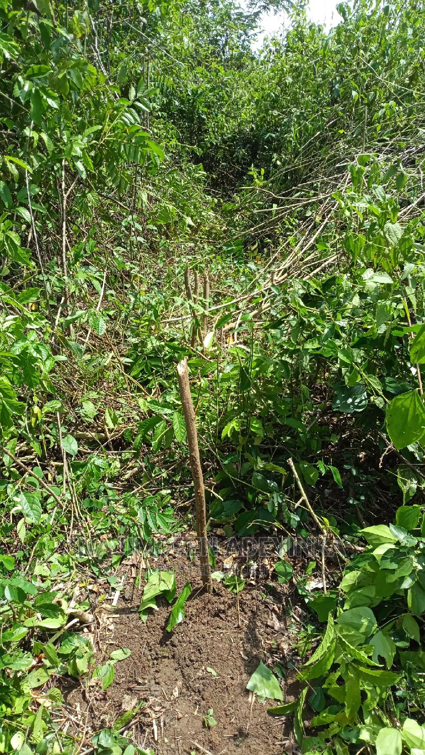 1 Acre of Land for Rent for Agricultural Purposes Etc
