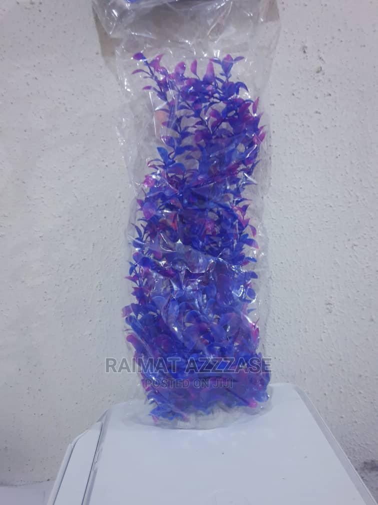 Blue Aquarium Plant