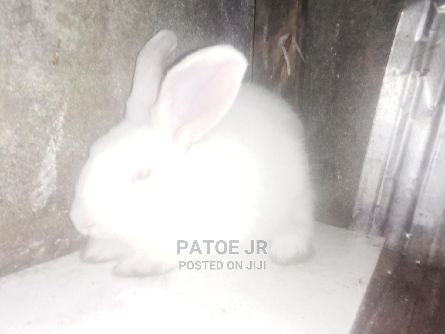 Archive: Rabbits, Healthy and Strong