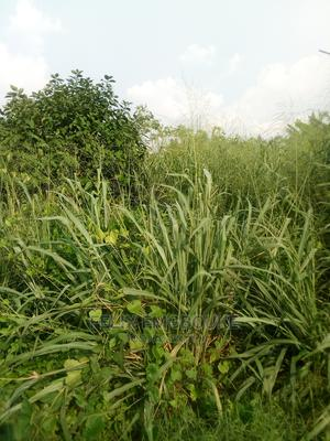 Land Direct From Community for Sale | Land & Plots For Sale for sale in Edo State, Benin City