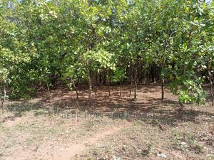 749sqm Residential Land for Sale in Katampe   Land & Plots For Sale for sale in Katampe, Katampe (Main)