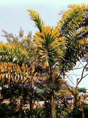 Plants Worth Having. | Landscaping & Gardening Services for sale in Abuja (FCT) State, Gwarinpa