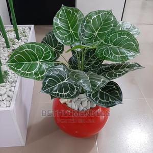 Purchase Mini Potted Plant at Bethelmendels in Nigeria | Garden for sale in Lagos State, Ikeja