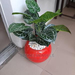 Mini Potted Plant for Sale by Bethelmendels NG | Garden for sale in Lagos State, Ikeja