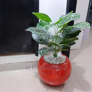 Purchase Quality Mini Potted Plant at Lagos Nigeria | Garden for sale in Lagos State, Ikeja