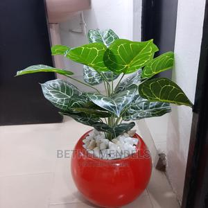 Buy Quality Mini Potted Plant at Lagos Nigeria | Garden for sale in Lagos State, Ikeja