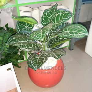 Purchase Exotic Mini Potted Plant in Lagos | Garden for sale in Lagos State, Ikeja