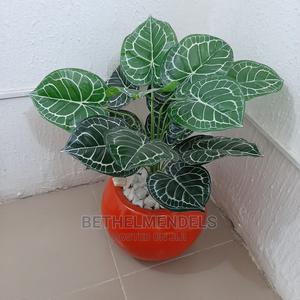 Buy Exotic Mini Potted Plant in Lagos | Garden for sale in Lagos State, Ikeja