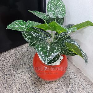 Beautiful Mini Potted Plant at Lagos for Sale | Garden for sale in Lagos State, Ikeja