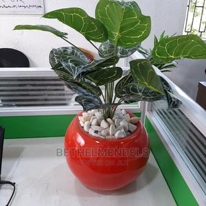 Purchase Glamorous Mini Potted Plant in Lagos Nigeria | Garden for sale in Lagos State, Ikeja
