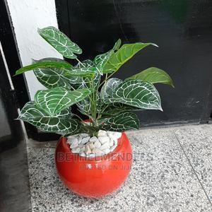 Purchase Beautiful Mini Potted Plant for Your Decor | Garden for sale in Lagos State, Ikeja