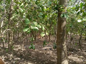 920sqm Residential Land for Sale in Dakibiyu   Land & Plots For Sale for sale in Abuja (FCT) State, Dakibiyu