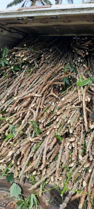 TME 419 Cassava Stems | Feeds, Supplements & Seeds for sale in Oyo State, Ibadan