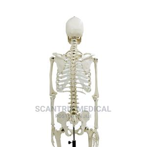 High Quality Models Life-Size Skeleton | Medical Supplies & Equipment for sale in Abuja (FCT) State, Gwarinpa