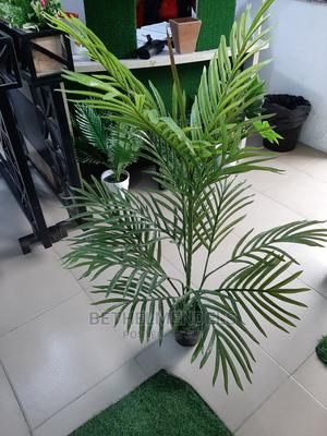 Palm Plant for Sale   Garden for sale in Lagos State, Ikeja