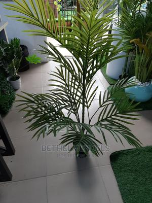 Purchase Palm Plant   Garden for sale in Lagos State, Ikeja