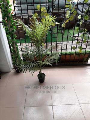 Buy Palm Plant at Bethemendels   Garden for sale in Lagos State, Ikeja