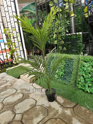 Acquire Beautiful Palm Plant at Lagos Nigeria   Garden for sale in Lagos State, Ikeja