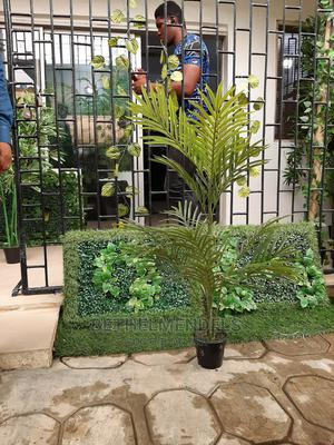 Palm Plant for Sale at Lagos Nigeria   Garden for sale in Lagos State, Ikeja