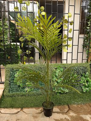 Palm Plant for Sale by Bethelmendels at Ikeja Lagos   Garden for sale in Lagos State, Ikeja