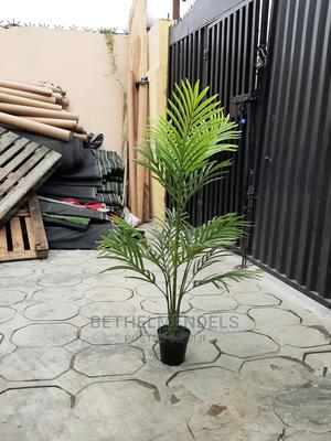Acquire 130cm Palm Plant at Lagos Nigeria   Garden for sale in Lagos State, Ikeja