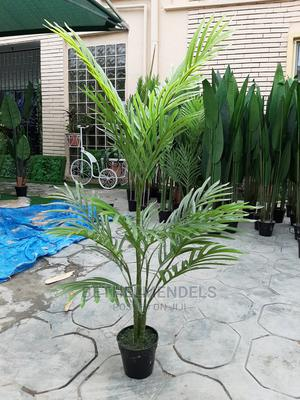 Obtain Exotic Palm Plant at Lagos Nigeria   Garden for sale in Lagos State, Ikeja