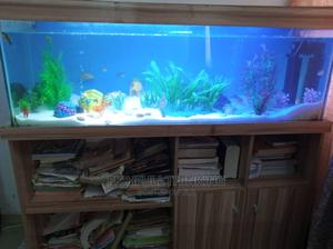 Aquarium and Library | Fish for sale in Lagos State, Ikeja
