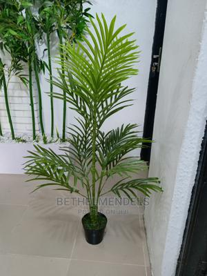 Obtain Exotic Palm Plant   Garden for sale in Lagos State, Ikeja