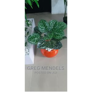 Lovely Mini Potted Plant in Lagos for Sale | Garden for sale in Lagos State, Ikeja