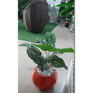 Impressive Mini Potted Plant Available for Sale in Ikeja | Garden for sale in Lagos State, Ikeja