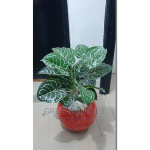 Attractive Mini Potted Plant for Sale in Lagos | Garden for sale in Lagos State, Ikeja