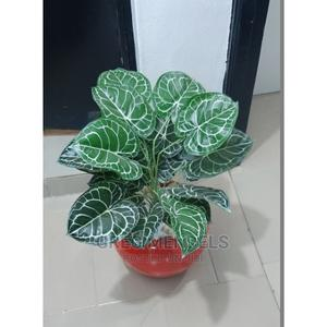 Attractive Mini Potted Plant for Sale in Ikeja | Garden for sale in Lagos State, Ikeja