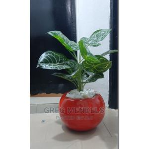 Attractive Mini Potted Plant Available in Nigeria for Sale | Garden for sale in Lagos State, Ikeja