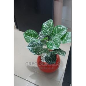 Attractive Mini Potted Plant Best for Mall Decor | Garden for sale in Lagos State, Ikeja