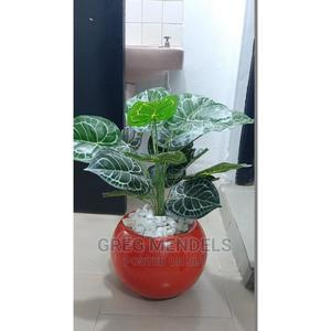 Beautiful Mini Potted Plant In Ikeja For Sale | Garden for sale in Lagos State, Ikeja