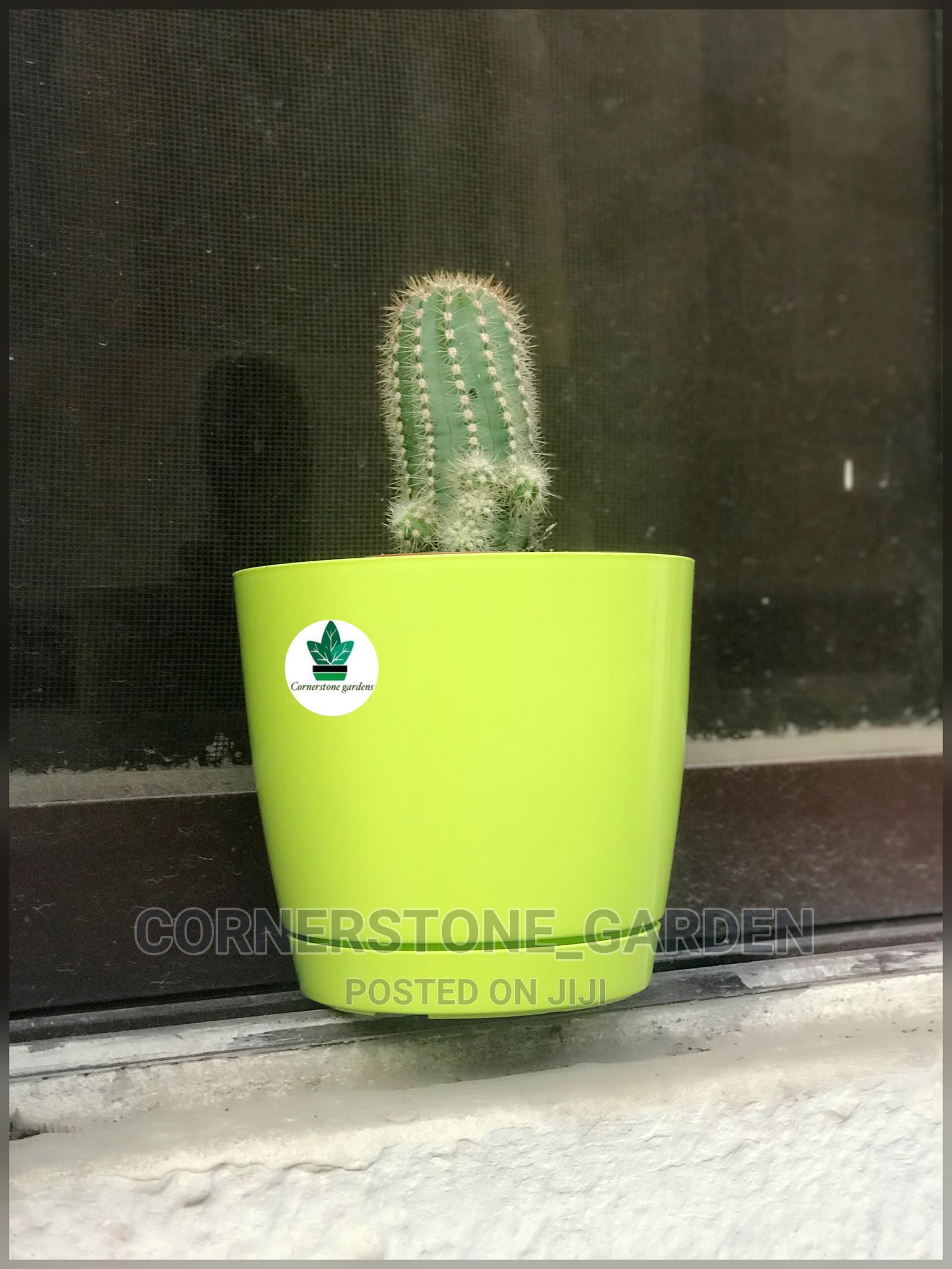 Archive: Cactus Plant