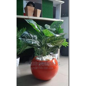 Enticing Mini Potted Plant in Bethelmendel for Sale | Garden for sale in Lagos State, Ikeja