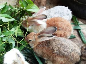 Rabbit For Sale | Livestock & Poultry for sale in Akwa Ibom State, Uyo