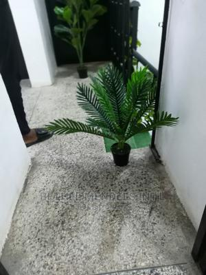 Obtain Exotic Mini Palm Plant at Ikeja Lagos NG | Garden for sale in Lagos State, Ikeja