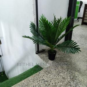 Amazing Mini Palm Plant for Sale by Bethelmendels at Nigeria | Garden for sale in Lagos State, Ikeja