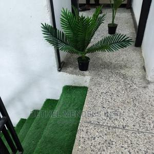 Purchase Exotic Mini Palm Plant by Bethelmendels at Lagos NG | Garden for sale in Lagos State, Ikeja