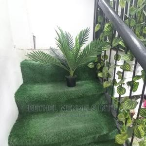Mini Palm Plant Sold at Lagos Nigeria | Garden for sale in Lagos State, Ikeja