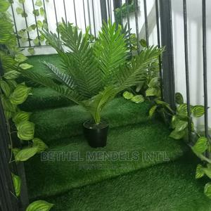 Exotic Mini Palm Plant Sold at Ikeja | Garden for sale in Lagos State, Ikeja