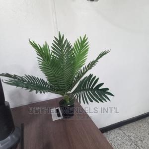 Adorable Mini Palm Plant Sold at Ikeja Lagos Bethelmendels | Garden for sale in Lagos State, Ikeja