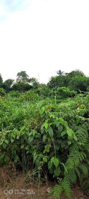7 Plots of Land for Sale at Ohanze Abia State   Land & Plots For Sale for sale in Abia State, Obi Ngwa