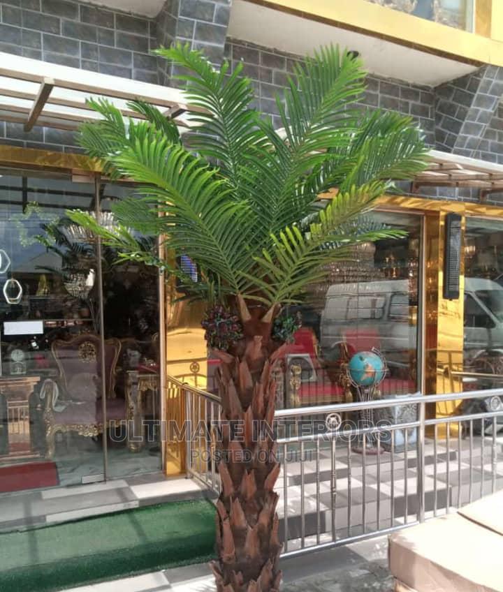 Decorative Palm Tree   Garden for sale in Ojo, Lagos State, Nigeria
