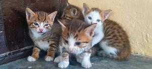 1-3 Month Male Mixed Breed Other | Cats & Kittens for sale in Lagos State, Surulere